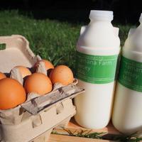 玉名牧場ジャージーミルク900ml×2本と自然卵6個セット
