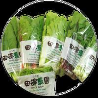 採りごろ葉菜セット(1BOX)
