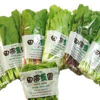 【定期便】採りごろ葉菜セット5種類以上(1BOXを毎月2回お届け)