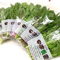 【定期便】採りごろ葉菜セット4種類以上(10パックを定期でお届け)