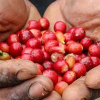 【深煎りコーヒー豆】エチオピア・シダモ・G-1グジ