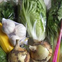 季節の野菜セット(M)2900円(送料・税込)