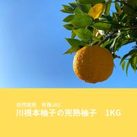 【なくなり次第終了】自然栽培 川根本柚子の完熟柚子 有機JAS 1kg