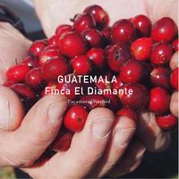 グァテマラ/パカマラ種 中煎り 200g