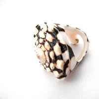 【SALE】うずまき貝のリング・まる