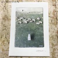 新明祐衣 POSTCARD 「白い塔の羊たち」