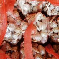 【送料込み】ニンニク 1kg ★農薬無散布・化学肥料不使用★