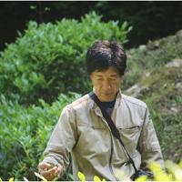 熊本応援プラン3000(応援&八代のハス茶ティバッグ7個入)