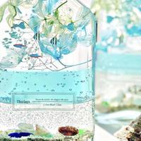 熱帯魚泳ぐ白砂ビーチの海の世界 ~アクアリウム~