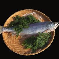 新巻鮭オス 約2.8~3.3kg オホーツク産