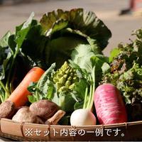 季節のおまかせ野菜 Mセット(送料無料)