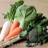 季節のおまかせ野菜 Sセット(送料無料)