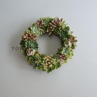 Wreath 多肉植物のリースM ※9/1現在、お届けまで1か月前後予定