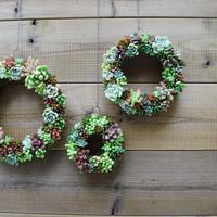 Wreath 多肉植物のリースS ※3/1現在、お届けまで1か月前後予定