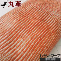 トカゲ革【最大幅25cm】ホワイト&キャロットオレンジ ツートン/ ツヤ弱/ 背割/0167