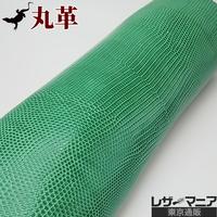 トカゲ革【最大幅34cm】グリーン/ツヤ強/ 背割/0469