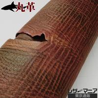 タイガーシャーク革 【一匹】グラデーション マルチカラー/0278