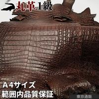 カイマンワニ革【一匹・A4サイズ/1級】茶/半ツヤ/WC302-04