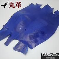 トカゲ革【最大幅31cm】サファイアブルー/ツヤ強/腹割/0462