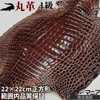 クロコダイル革【一匹】茶【22×22㎝/1級】ツヤ強/8824