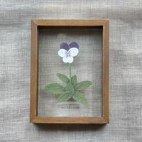 紙の花屋 asanochiaki「ビオラ」
