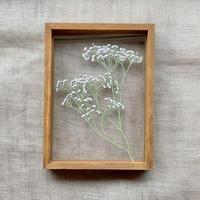 紙の花屋 asanochiaki「かすみ草 」