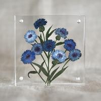 紙の花屋asanochiaki「コーンフラワーブルー」
