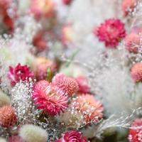 Tida Flower Wallpaper③(たて)