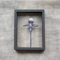 紙の花屋 asanochiaki「パフィオペディラム」