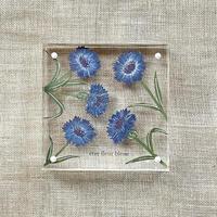 紙の花屋 asanochiaki「コーンフラワーブルー 」