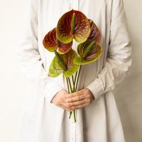 かわまたの花「アンスリュームスパイクアンティーク」