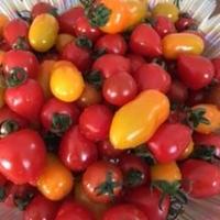 【2~3箱はこちら!】彩りミニトマトセット1箱(3kg)