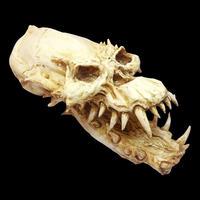 """Vampire Skull from """"Fright Night"""" by Steve Johnson"""