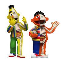 XXRAY Plus Sesame Street Anatomical Bert & Ernie by Jason Freeny