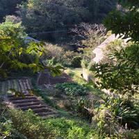 【森と海】1/12(日)開催  Sunday  meditation  class