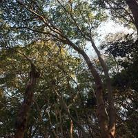 【森と海】12/12(木)開催 師走満月の瞑想会