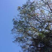 【森と海】中医学の基礎とストレスケア編