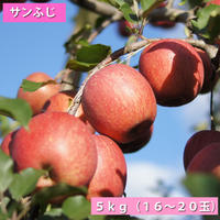 【送料無料】「サンふじ」5kg(16~20玉)【青森県産りんご:家庭用】
