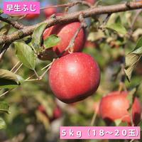 【送料無料】「早生ふじ」5kg(16~18玉)【青森県産りんご:家庭用】