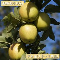 【送料無料】「王林(おうりん)」5kg(16~20玉)【青森県産りんご:家庭用】