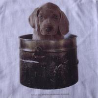 90's William Wegman Weimaraner PUP POT フォト Tシャツ M ウィリアム ウェッグマン FOTOFOLIOワイマナラー犬 子犬ART芸術【deg】