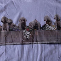 90's William Wegman Weimaraner MARIGOLDS フォト Tシャツ M白 ウィリアム ウェッグマン FOTOFOLIO ワイマナラー犬ART芸術【deg】