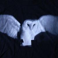 90's ビル ヴィオラ SLEEP OWL Tシャツ XL Bill Viola Nam June Paik ナム ジュン パイクvideo art ビデオ アート フォト 芸術【deg】