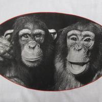 90's YLLA チンパンジー Tシャツ L 白 女性 動物 写真家 フォト イーラ CHIMPANZEES FOTOFOLIO 写真 ニひきのこぐま ART 芸術 美術館 【deg】