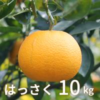 【1月販売予定】森果樹園のはっさく10kg