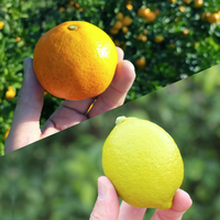 森果樹園の温州みかん3kgとレモン2kgのセット