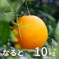 【3月販売予定】森果樹園のなるとオレンジ10kg