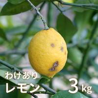 森果樹園のわけありレモン3kg