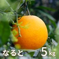 【販売期間 2/1〜4/26】森果樹園のなるとオレンジ5kg