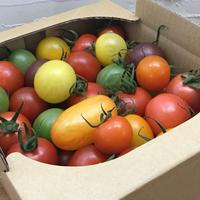 【送料無料定期便】おまかせCoiinaトマト 1kg